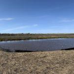 West side of pond