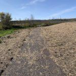 Path around southeast side of pond